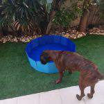 PVC Foldable Pet Swimming Pool Outdoor Bathtub with Protective Lining for Dogs and Kiddies