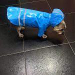 Summer Outdoor Puppy Raincoat